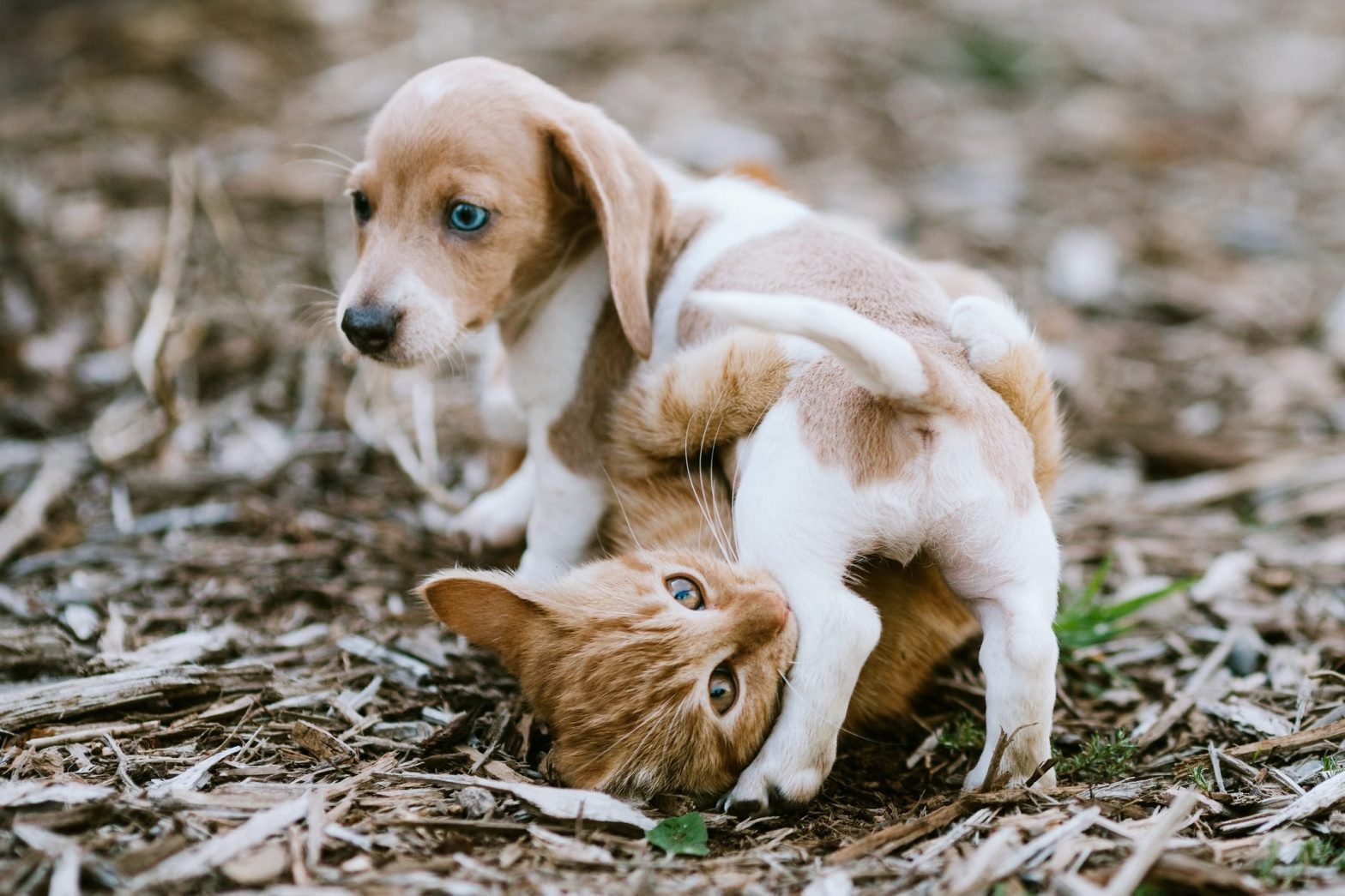 6 Tips for Bringing Cats and Dogs Together